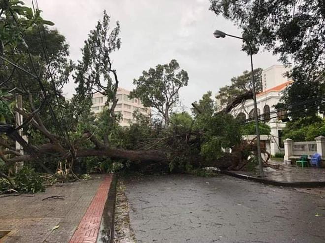 Lan tỏa hình ảnh khách sạn tại Vũng Tàu đón người nghèo tránh bão số 9-5