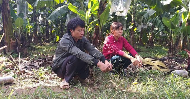 Hà Nội: Hàng nghìn buồng chuối nghi bị phun thuốc ép chín-4