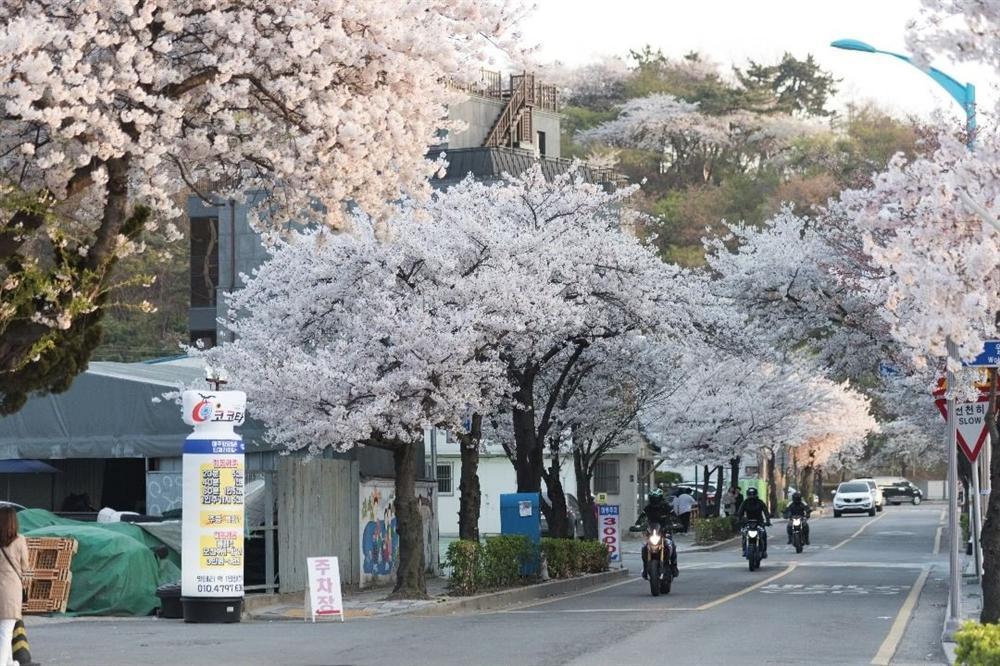 Khám phá thiên đường du lịch nổi tiếng qua phim ảnh ở Hàn Quốc-13
