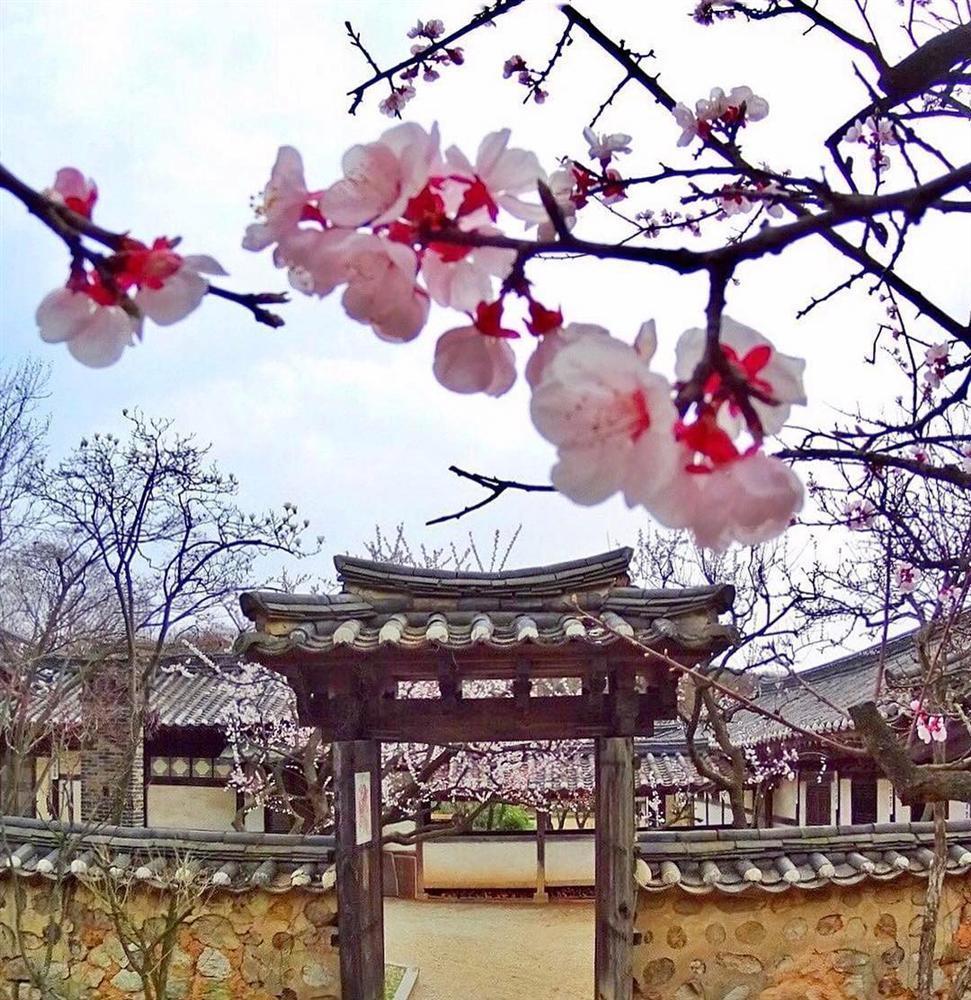 Khám phá thiên đường du lịch nổi tiếng qua phim ảnh ở Hàn Quốc-16