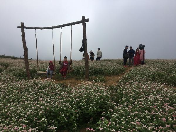 Mê mẩn ngắm đồi hoa tam giác mạch trên cao nguyên Mộc Châu lộng gió-2
