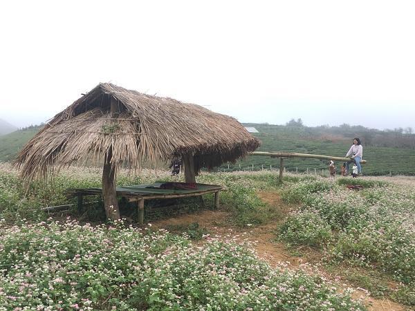 Mê mẩn ngắm đồi hoa tam giác mạch trên cao nguyên Mộc Châu lộng gió-5