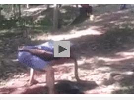 'Nụ hôn tử thần' hạ gục rắn khổng lồ trong tích tắc