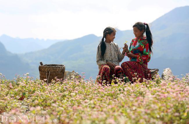 Ảnh: Mê mẩn những đồi hoa tam giác mạch ở Hà Giang-3