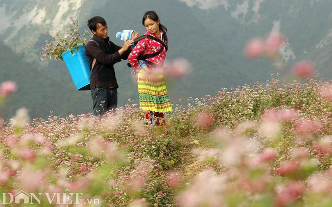 Ảnh: Mê mẩn những đồi hoa tam giác mạch ở Hà Giang-6