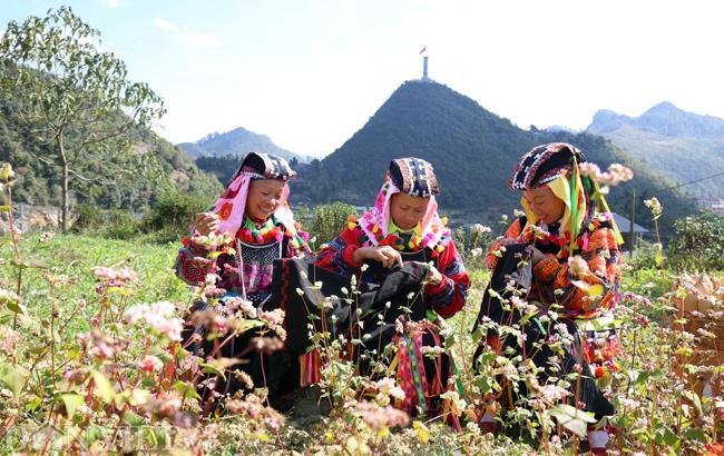 Ảnh: Mê mẩn những đồi hoa tam giác mạch ở Hà Giang-8