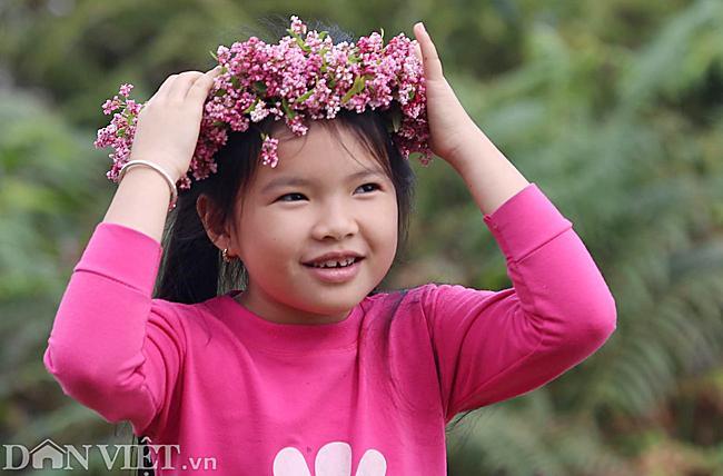 Ảnh: Mê mẩn những đồi hoa tam giác mạch ở Hà Giang-12