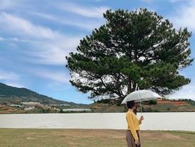 10 cây cô đơn 'sống ảo' giới trẻ Việt Nam thường xuyên check-in