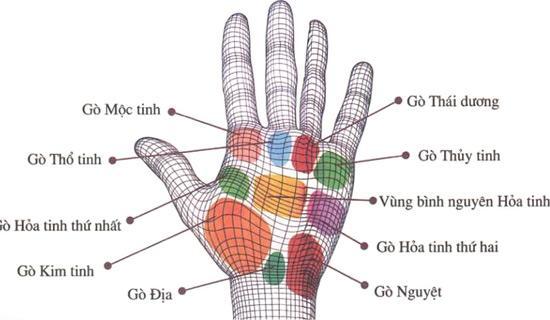 Chỉ cần nhìn 9 gò trong lòng bàn tay sẽ biết ngay tương lai ai GIÀU SANG, ai NGHÈO HÈN-1