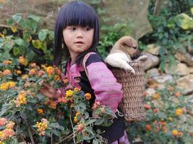 Lạc lối trong những sắc hoa dại trên cao nguyên Mộc Châu