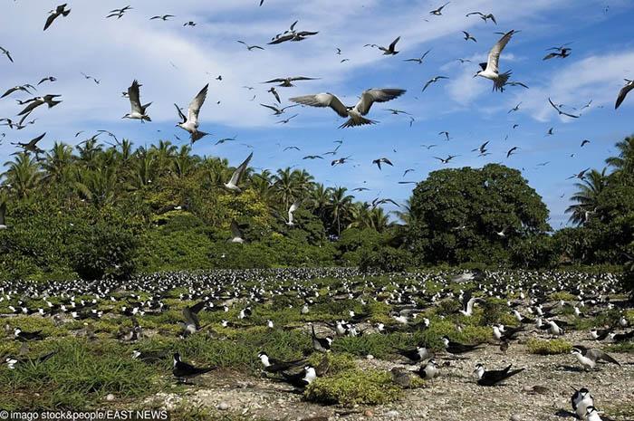 Sửng sốt trước 10 hòn đảo bí ẩn được xem là sự kỳ diệu của tạo hóa-7