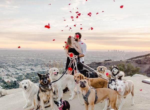 Cô gái hạnh phúc nhất thế giới, được cầu hôn với 16 chú chó bên cạnh-1