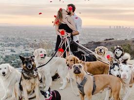 Cô gái hạnh phúc nhất thế giới, được cầu hôn với 16 chú chó bên cạnh