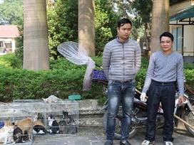 Hình sự mật phục bắt nhóm chuyên trộm mèo