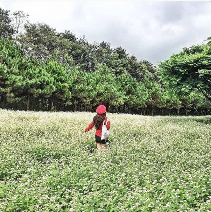 Lùng ra địa chỉ 9 loài hoa hot ở Đà Lạt hội sống ảo nhất định phải check-in-9