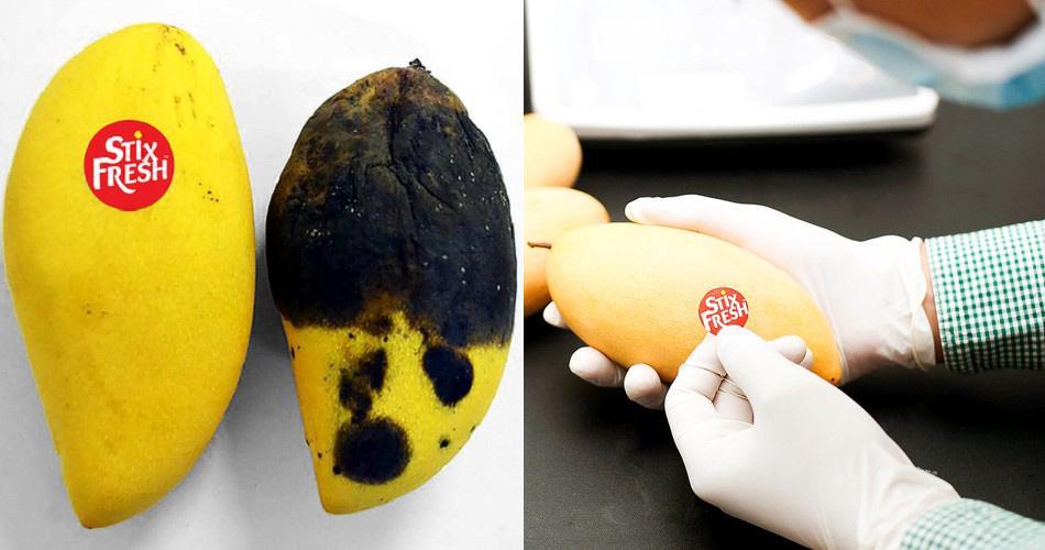 Hoá chất đặc biệt: 1 miếng dán nhỏ giữ trái cây tươi 14 ngày-1
