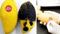 Hoá chất đặc biệt: 1 miếng dán nhỏ giữ trái cây tươi 14 ngày