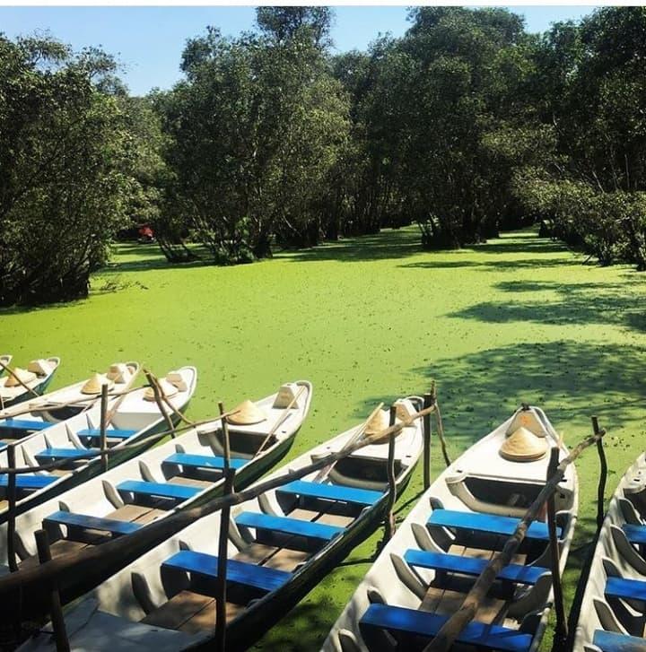 Khám phá rừng tràm xanh biếc ở An Giang đẹp như tiên cảnh đang được giới trẻ săn lùng-5