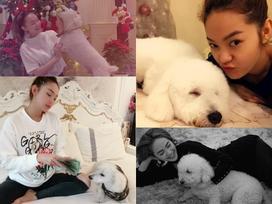 Sướng như cún cưng của Minh Hằng: Được ôm ấp, ngủ chung lại còn đi khắp thế gian cùng cô chủ