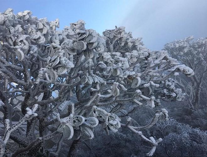 Đỉnh Fansipan đẹp ngỡ ngàng giữa trời tuyết trắng-4