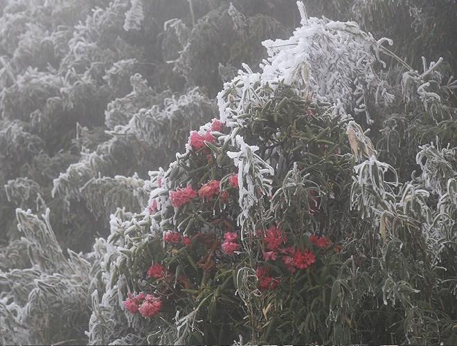 Đỉnh Fansipan đẹp ngỡ ngàng giữa trời tuyết trắng-16
