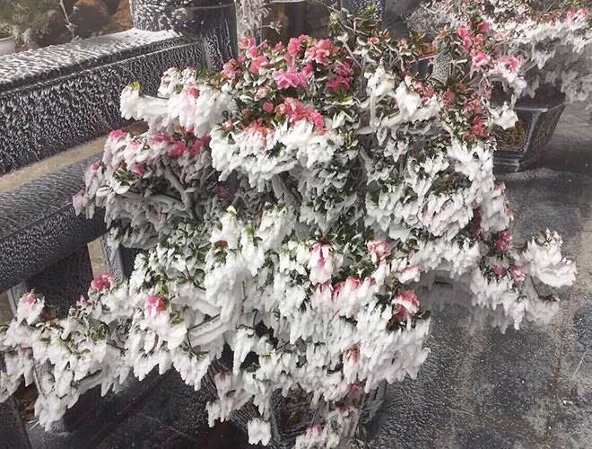Đỉnh Fansipan đẹp ngỡ ngàng giữa trời tuyết trắng-18