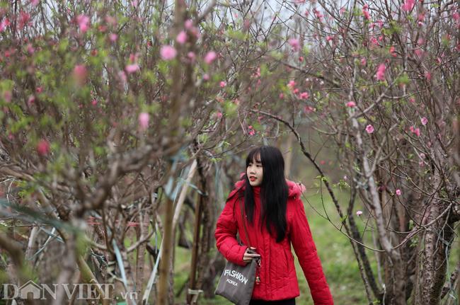 ẢNH: Đào nở sớm những ngày đầu năm mới ở làng hoa Nhật Tân-2