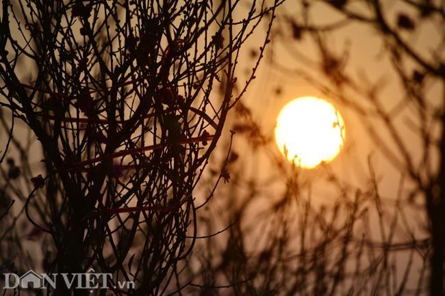 ẢNH: Đào nở sớm những ngày đầu năm mới ở làng hoa Nhật Tân-4