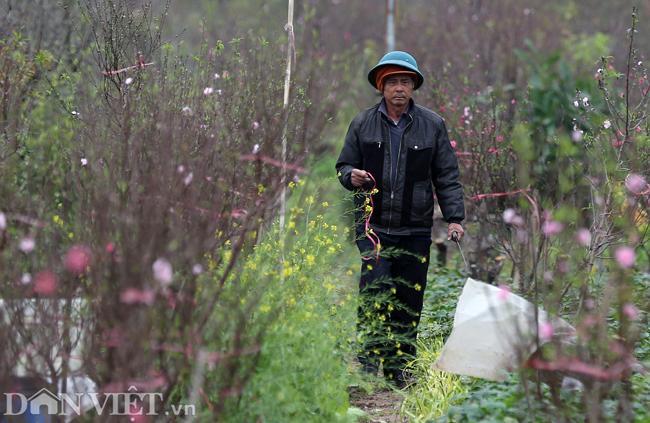 ẢNH: Đào nở sớm những ngày đầu năm mới ở làng hoa Nhật Tân-8