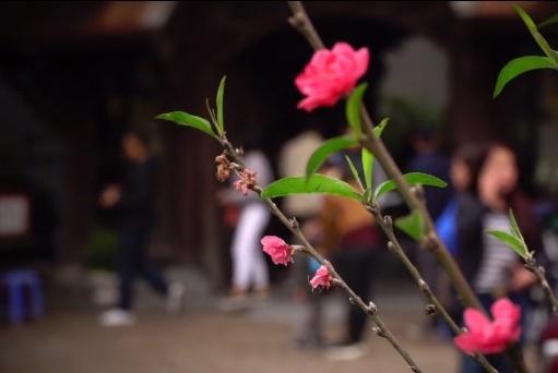 Cảm nhận không khí xuân về sớm trên con đường hoa đào dài 4km bung nở ở Hà Nội-1