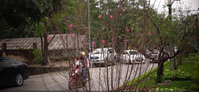 Cảm nhận không khí xuân về sớm trên con đường hoa đào dài 4km bung nở ở Hà Nội-2