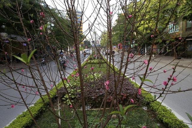 Cảm nhận không khí xuân về sớm trên con đường hoa đào dài 4km bung nở ở Hà Nội-3