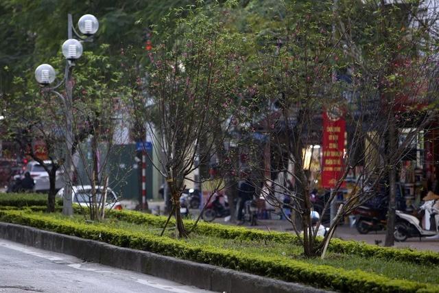 Cảm nhận không khí xuân về sớm trên con đường hoa đào dài 4km bung nở ở Hà Nội-4