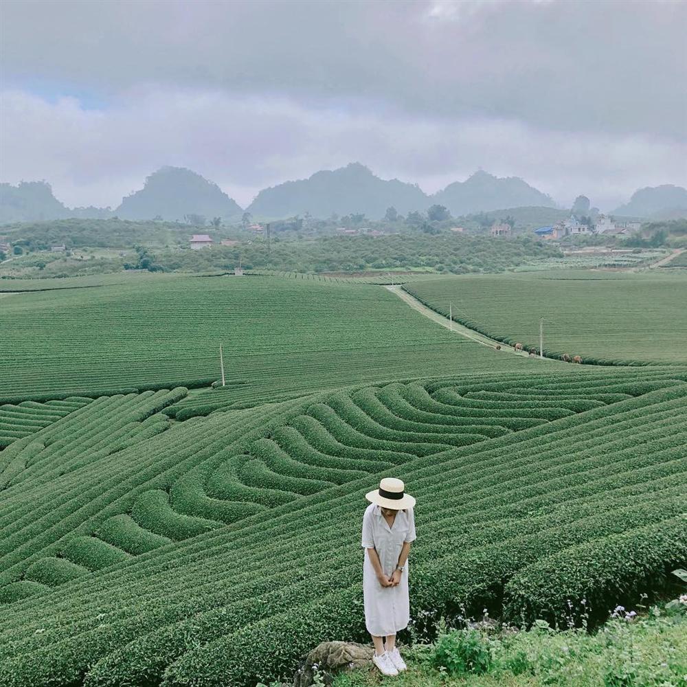 7 đồi chè sống ảo đỉnh cao dành cho dân thích xê dịch ở Việt Nam-1