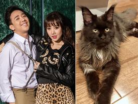 Chưa cần cô gái nào xuất hiện, Hari Won ghen tuông cả với con mèo đực của Trấn Thành