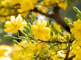 Clip: Mách bạn 20 loài hoa nên trưng trong nhà dịp Tết