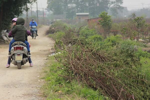 11 gia đình uất nghẹn vì bị chặt phá hàng trăm gốc đào bán Tết trong khi mải xem đội tuyển Việt Nam đá bóng-7