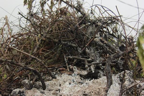 11 gia đình uất nghẹn vì bị chặt phá hàng trăm gốc đào bán Tết trong khi mải xem đội tuyển Việt Nam đá bóng-8