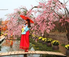 Du khách thoải mái tạo dáng chụp ảnh tại vườn đào Hà Nội