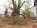 Vụ hàng trăm gốc đào bị đốn hạ: Công an Bắc Ninh chỉ đạo khẩn-2