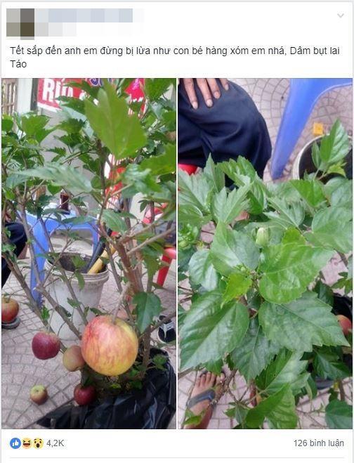 Cú lừa thế kỷ: Mua táo bonsai chưng Tết éo le lại nở ra hoa dâm bụt-1
