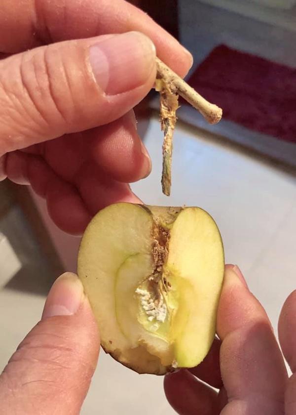 Cú lừa thế kỷ: Mua táo bonsai chưng Tết éo le lại nở ra hoa dâm bụt-3