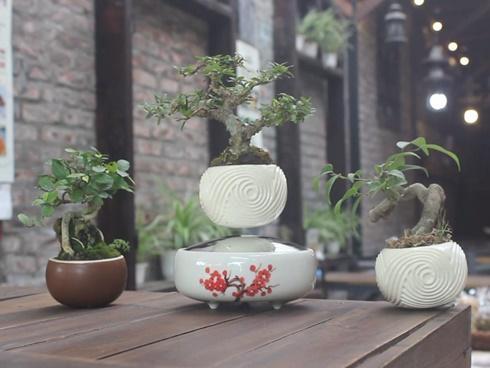 Cú lừa thế kỷ: Mua táo bonsai chưng Tết éo le lại nở ra hoa dâm bụt-4