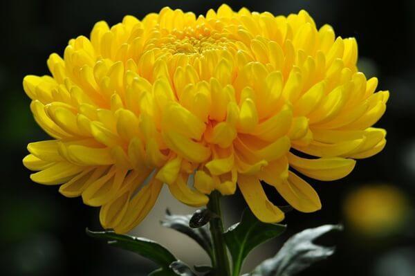 8 loại hoa nên có trong ngày Tết để cả năm gặp nhiều may mắn, phúc lộc ngập nhà-1