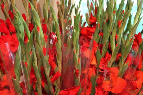 8 loại hoa nên có trong ngày Tết để cả năm gặp nhiều may mắn, phúc lộc ngập nhà-2