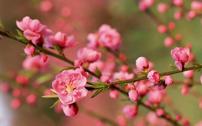 8 loại hoa nên có trong ngày Tết để cả năm gặp nhiều may mắn, phúc lộc ngập nhà-3