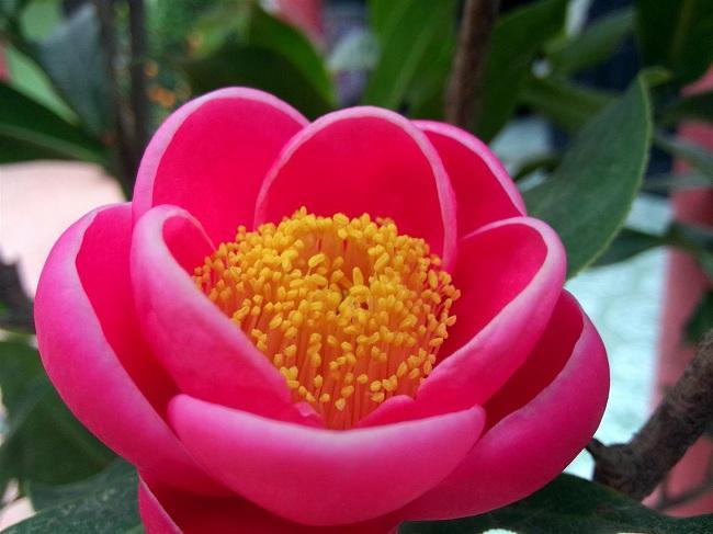 8 loại hoa nên có trong ngày Tết để cả năm gặp nhiều may mắn, phúc lộc ngập nhà-4