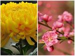 8 loại hoa nên có trong ngày Tết để cả năm gặp nhiều may mắn, phúc lộc ngập nhà