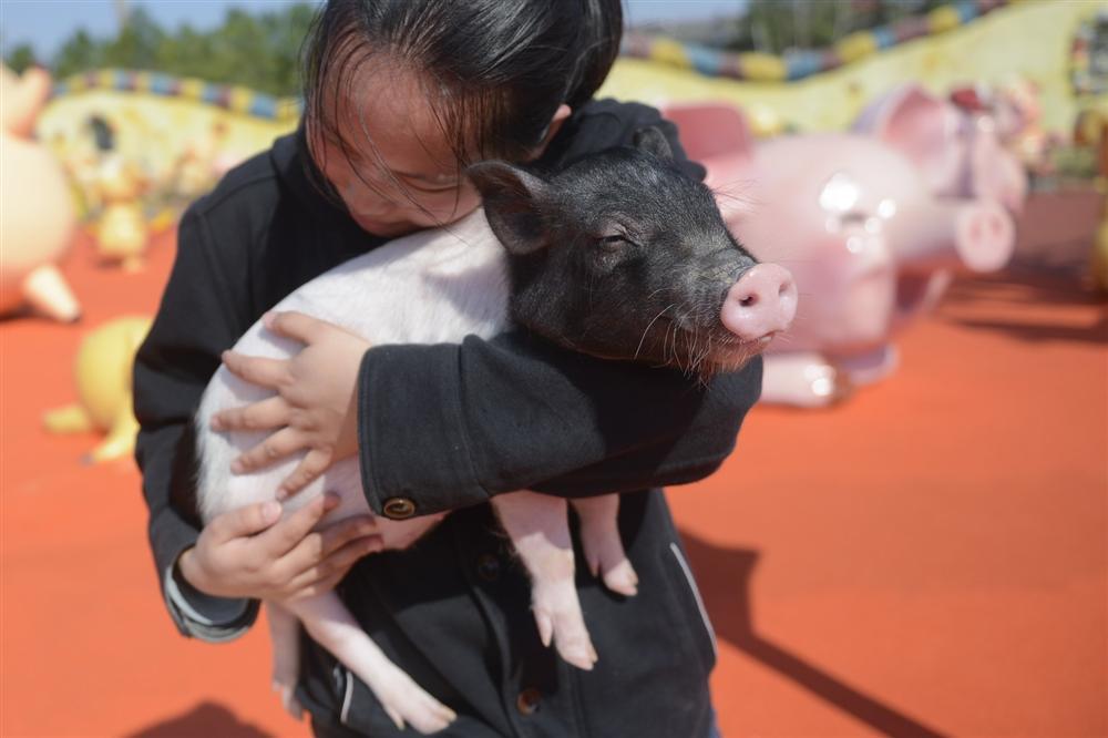 Công viên Hành tinh Lợn ở Trung Quốc hút khách dịp năm mới-1