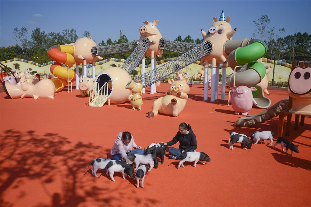 Công viên Hành tinh Lợn ở Trung Quốc hút khách dịp năm mới-2